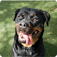 Adopt A Pet :: Gracie - Martinez, CA