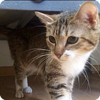Adopt A Pet :: Ann Elise (in CT) - Manchester, CT