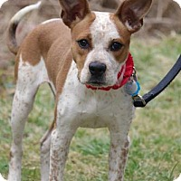 Adopt A Pet :: Zelda - Chester Springs, PA