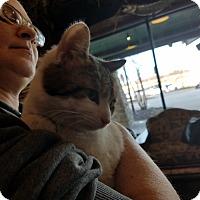 Adopt A Pet :: Kerplunk - Hainesville, IL