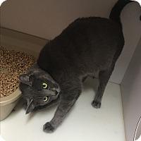Adopt A Pet :: Carly - Goshen, NY