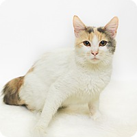 Adopt A Pet :: Cher - New Castle, PA