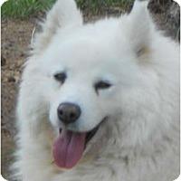 Adopt A Pet :: Katie - Arvada, CO