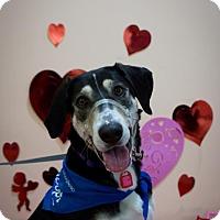 Adopt A Pet :: Honey - Saskatoon, SK