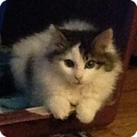 Adopt A Pet :: Maggie - Horsham, PA