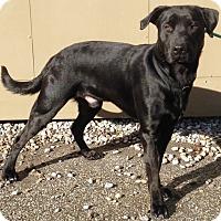 Adopt A Pet :: Welles - Pleasant Plain, OH