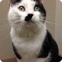 Adopt A Pet :: Bitty - Channahon, IL