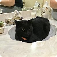 Adopt A Pet :: Beanie and/or Buttons - Phoenix, AZ