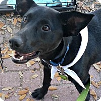 Adopt A Pet :: Turbie - Bradenton, FL