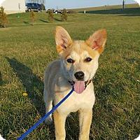 Adopt A Pet :: Diamond Baby - New Oxford, PA