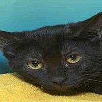 Adopt A Pet :: PATRICK - Alameda, CA