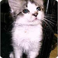 Adopt A Pet :: Crusty - Chilhowie, VA