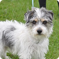 Adopt A Pet :: KC - Tumwater, WA