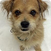 Adopt A Pet :: Gobble - Mission Viejo, CA