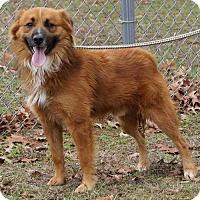 Adopt A Pet :: BEAR ~ PENDING! YAY! - Hanover, PA
