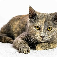Adopt A Pet :: Juliane - Oxford, MS