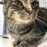 Adopt A Pet :: Jenna - PetSmart - Kalamazoo, MI