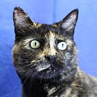 Adopt A Pet :: Yonah - Winston-Salem, NC