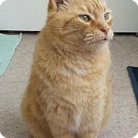 Adopt A Pet :: Blondie - Scranton, PA