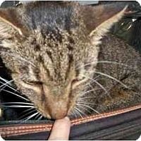 Adopt A Pet :: Antonio - Secaucus, NJ