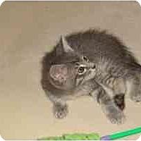 Adopt A Pet :: Dusty - Milwaukee, WI