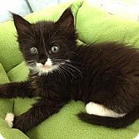 Adopt A Pet :: Sophia - Miami, FL