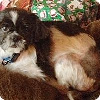 Adopt A Pet :: Koda - Hamilton, ON