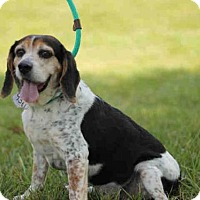 Adopt A Pet :: Rufus - Matthews, NC