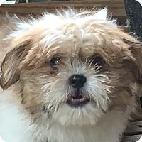 Adopt A Pet :: Bo - Staunton, VA