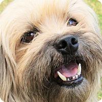 Adopt A Pet :: Peanut Butters - Houston, TX