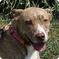 Adopt A Pet :: Lilith - Monroe, MI