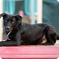 Adopt A Pet :: Jack - Armonk, NY