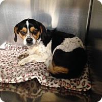 Adopt A Pet :: Weezy - Albemarle, NC
