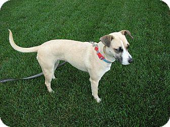 Terrier (Unknown Type, Medium) Mix Dog for adoption in Minnetonka, Minnesota - Beauty