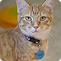 Adopt A Pet :: Queso - Grand Rapids, MI