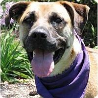 Adopt A Pet :: Misty - Encinitas, CA