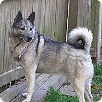 Adopt A Pet :: Petey - Belleville, MI