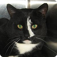 Adopt A Pet :: BOB - Hamilton, NJ