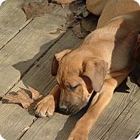 Adopt A Pet :: ralph - Julian, NC