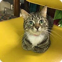 Adopt A Pet :: Sophie - Medina, OH