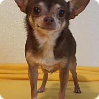 Adopt A Pet :: Bella # 2 - Dallas, TX