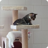 Adopt A Pet :: Carl(Teddy) - Chippewa Falls, WI
