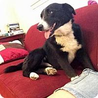 Adopt A Pet :: Rory - Boulder, CO