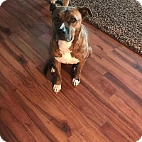 Adopt A Pet :: Holly - Durham, NC