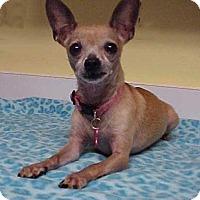Adopt A Pet :: Comet - 6 lbs - Dahlgren, VA