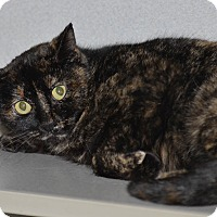 Adopt A Pet :: Cleo - Ottumwa, IA