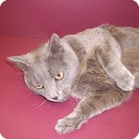 Adopt A Pet :: Grayson - Muscatine, IA