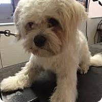 Adopt A Pet :: Mango-Medical Hold - Boulder, CO