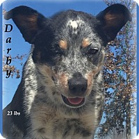 Adopt A Pet :: Darby-Very Sweet Dog! - Marlborough, MA