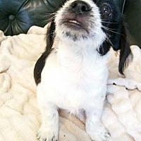 Adopt A Pet :: Kendall - Davie, FL